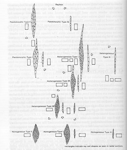 plant discoveries sherwin carlquist wood evolution